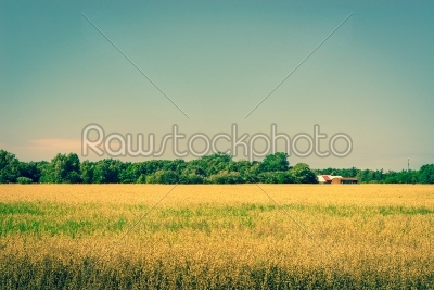 stock photo: golden crops on a field with a barn-Raw Stock Photo ID: 70232