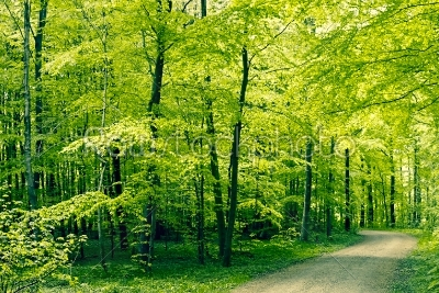 stock photo: green forest panorama landscape-Raw Stock Photo ID: 68076