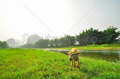 stock photo: guilin park and karst rocks yangshuo-Raw Stock Photo ID: 57058