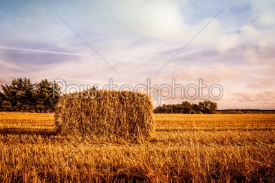 stock photo: harvested straw bale-Raw Stock Photo ID: 66364