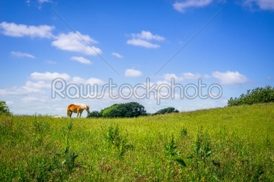 stock photo: horse standing on a green field-Raw Stock Photo ID: 69773
