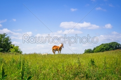 stock photo: horse standing on an idyllic meadow-Raw Stock Photo ID: 69774