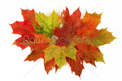 stock photo: leaves fall-Raw Stock Photo ID: 60252