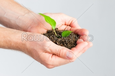 stock photo: man holding seedling in his hands-Raw Stock Photo ID: 49634
