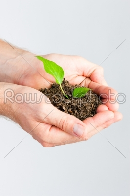 stock photo: man holding seedling in his hands-Raw Stock Photo ID: 49635