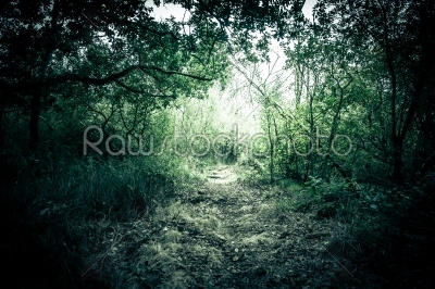 stock photo: mysterious forest-Raw Stock Photo ID: 66414