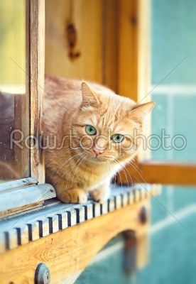 stock photo: orange cat in the window-Raw Stock Photo ID: 68336