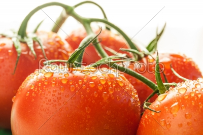 stock photo: red tomatoes with vine-Raw Stock Photo ID: 75048