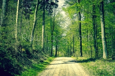 stock photo: road in the forest at springtime-Raw Stock Photo ID: 67744