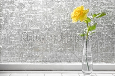 stock photo: single rose in yellow color-Raw Stock Photo ID: 69789