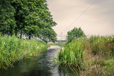 stock photo: small lake stream with rushes-Raw Stock Photo ID: 69817
