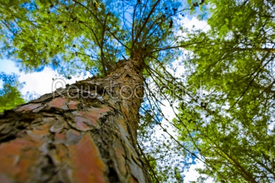 stock photo: tree from below-Raw Stock Photo ID: 75053