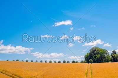 stock photo: trees on a row in a countryside landscape-Raw Stock Photo ID: 69793