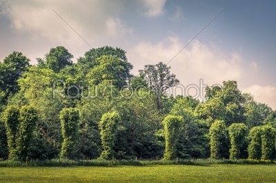 stock photo: trees on a row on a field-Raw Stock Photo ID: 68115