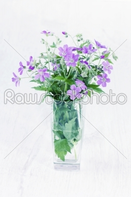 stock photo: violet wild flowers in a glass vase-Raw Stock Photo ID: 68463